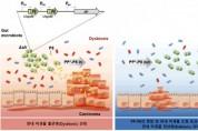 쎌바이오텍, 대장암 신약 'PP-P8' 마이크로바이옴 조절 효과 최초 발견